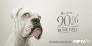 RSPCA QLD: We're all creatures great & small - Dog