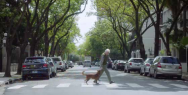 Instituto de Transplante Hepatico Argentino: The Man & The Dog