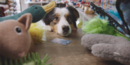 Interac Association: Pets With Credit