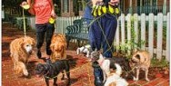 LCI Workers' Comp: Tail Waggin' Dog Walkers