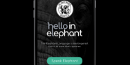 The David Sheldrick Wildlife Trust: Hello in Elephant