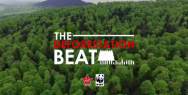 Virgin Radio / WWF: The Deforestation Beat