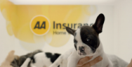 Home and Contents Insurance: Puppies