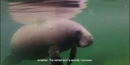 Pohjola Insurance: You only have one life. Live it. Manatees