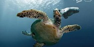 Sea Shepherd: Gloves - Turtle